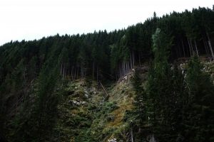 Cómo son las precipitaciones en el bosque de montaña