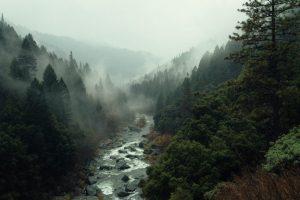 Cómo son las precipitaciones en el bosque esclerófilo