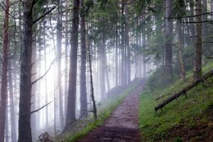 Cómo son las precipitaciones en los bosques primarios