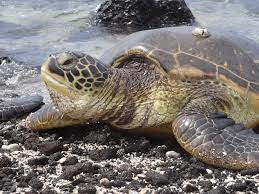 Cuáles son las características de la flora y fauna del océano Atlántico -