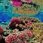 Flora y Fauna del Océano Atlántico: [Características y Ejemplos]