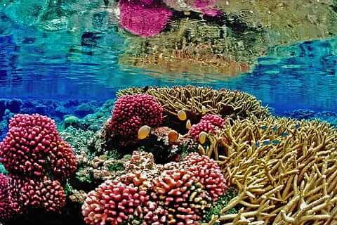 Cuáles son las características de la flora y fauna del océano Atlántico