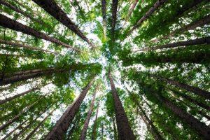 Dónde se ubica el bosque de hayas geográficamente