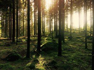 Dónde se ubica el bosque ombrófilo geográficamente