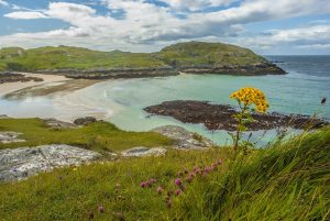 Qué tipo de flora predomina en el océano Atlántico