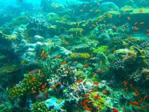 Flora y Fauna del Océano Índico