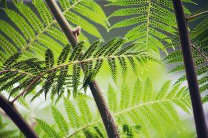 5 plantas y árboles característicos del Mesozoico - Helechos