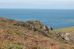 5 plantas características del océano Atlántico - Praderas marinas