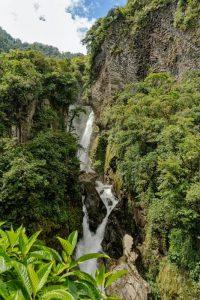 Qué características tiene el bosque amazónico -