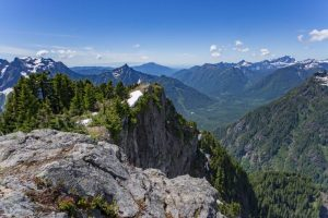 Qué características tiene el bosque de montaña