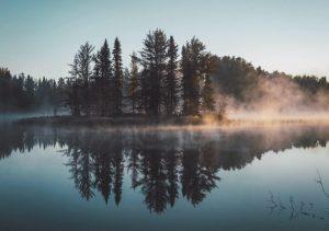 Qué características tiene el bosque esclerófilo