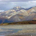 Flora y Fauna de la Tundra: [Características y Ejemplos]