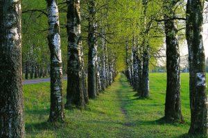 Qué características tienen los bosques secundarios