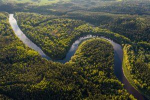 Qué es el bosque amazónico -