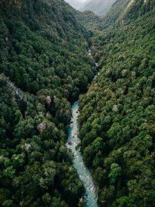 Qué es el bosque amazónico