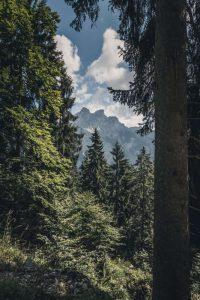 Qué es el bosque de montaña