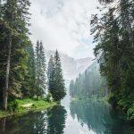 Bosque Esclerófilo: [Características, Flora, Fauna y Temperatura]