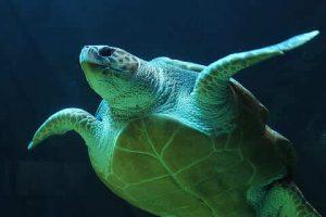 Qué fauna predomina en el océano Índico