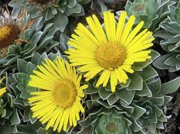 Qué flora dominó en el Mesozoico