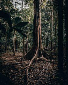 Qué flora predomina en el bosque amazónico