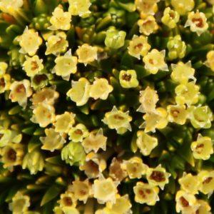 Qué flora predomina en el clima frío