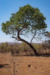 Qué flora predomina en los bosques secundarios