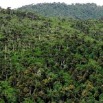 Bosques Primarios: [Características, Flora, Fauna y Temperatura]
