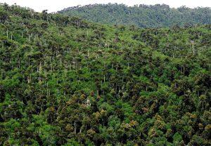 Qué son los bosque primarios o nativos