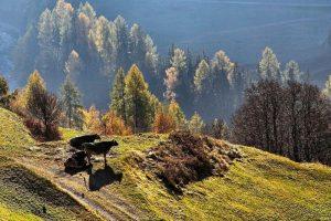 Qué son los bosques secundarios -