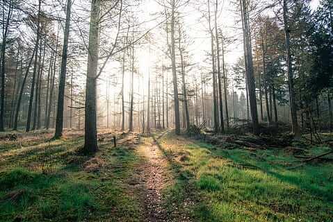 Qué son los bosques secundarios