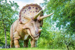 5 animales característicos del Mesozoico - Triceratops