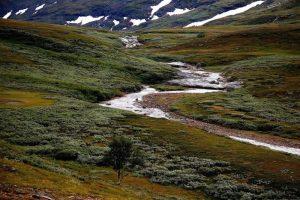 Tundra alpina
