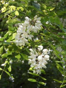 Qué flora predomina en el matorral