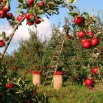 Agricultura ecológica: ¿Cuestión de unos pocos o de muchos?
