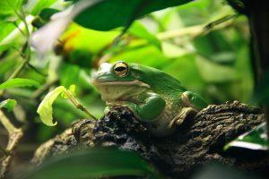 Qué fauna predomina en los bosques secundarios