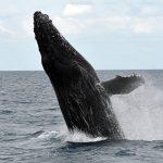 Flora y Fauna del Clima Oceánico