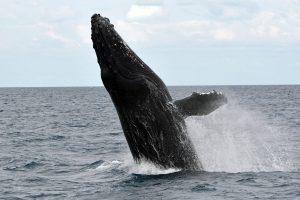Qué fauna predomina en el clima oceánico