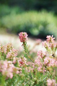Qué flora predomina en la tundra