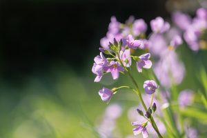 Qué flora predomina en el clima mediterráneo