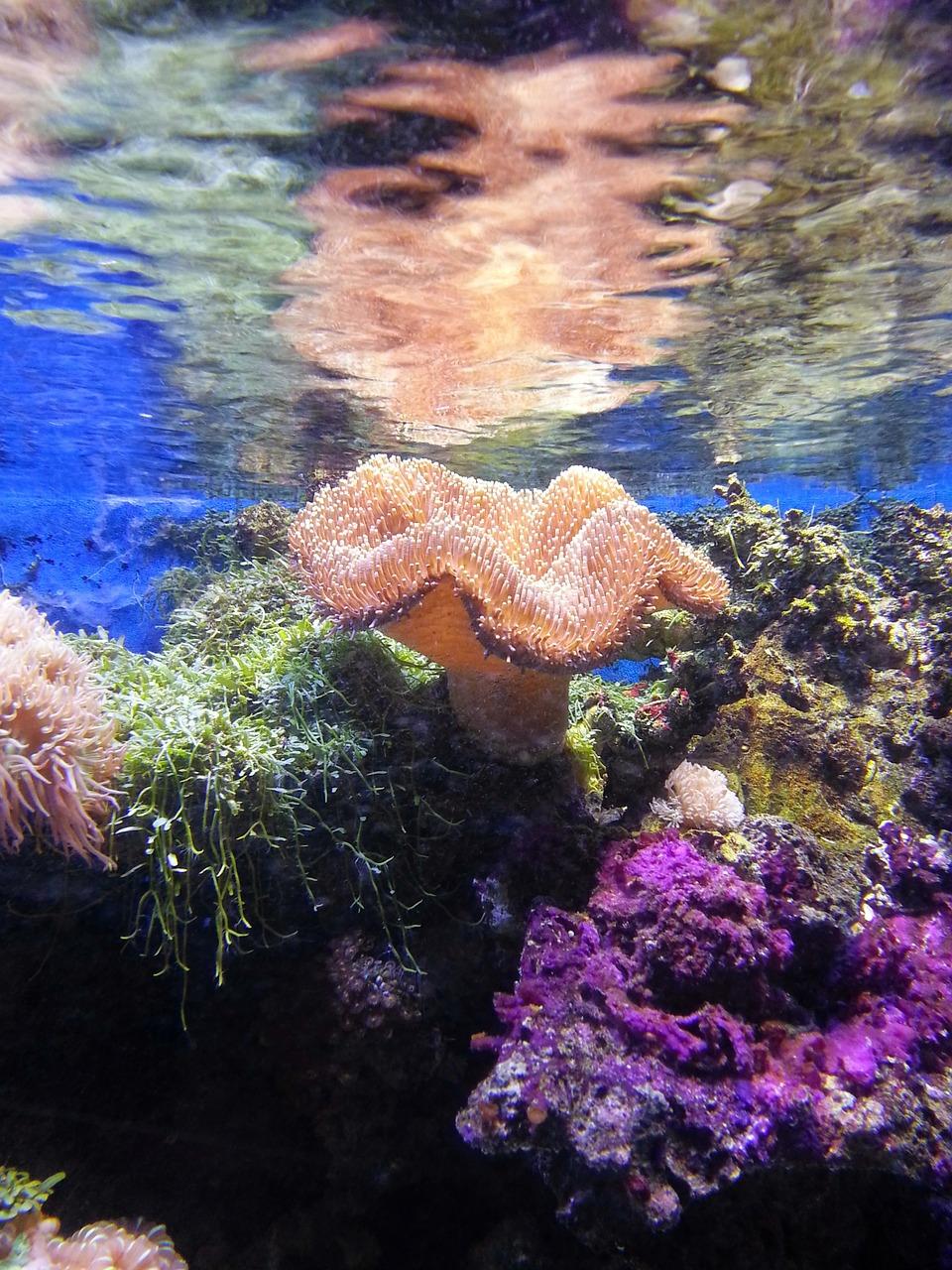 Qué características tiene la flora y fauna del océano �ndico