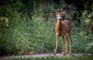 Qué fauna predomina en el bosque de hayas