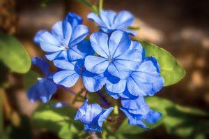 Qué plantas predominan en un jardín mediterráneo