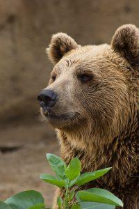 Qué fauna predomina en el bosque de montaña