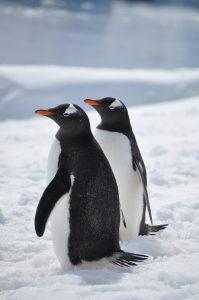 Qué fauna predomina en el clima frío